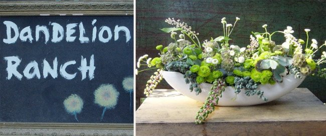 dandelion ranch