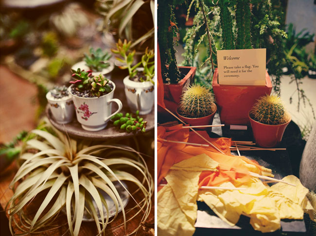 succulents in tea cups airplants wedding