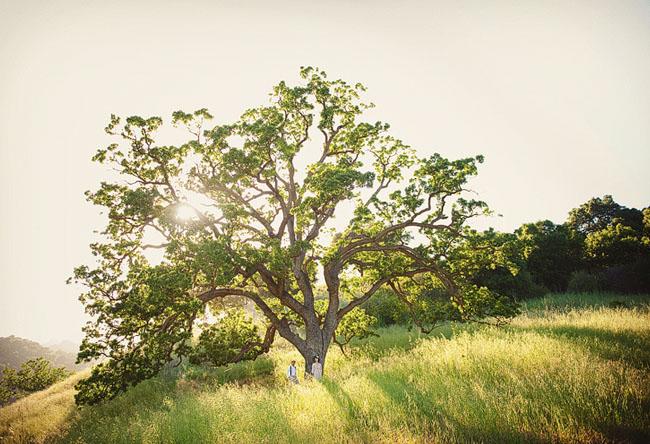 big oak tree couple in love