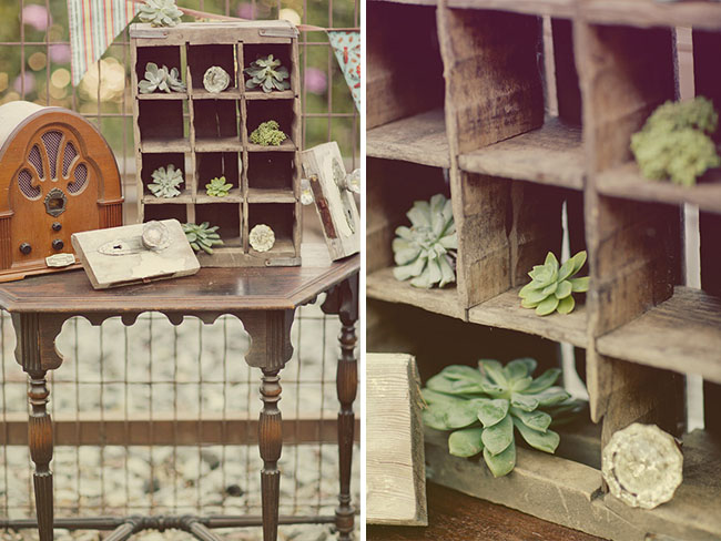 succulents in wooden box display