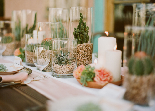succulents and beans in glass jars