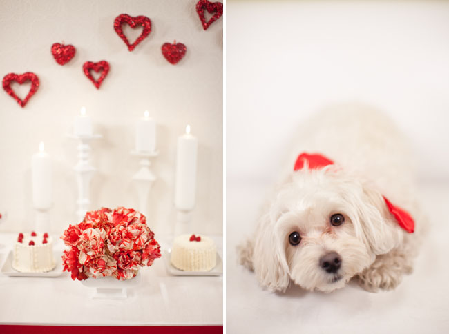 red hearts and puppy