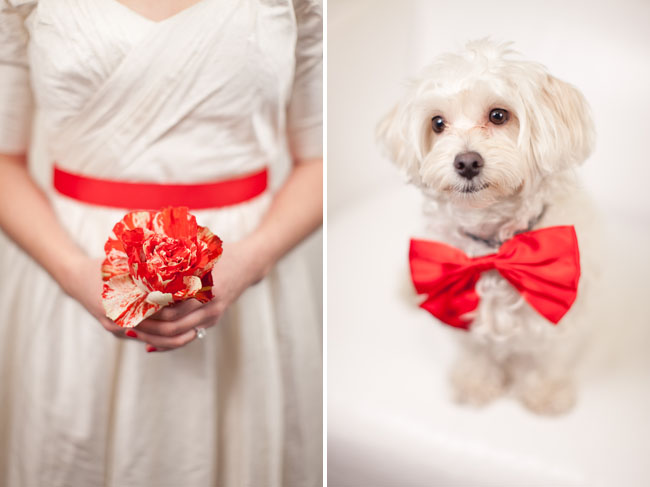 puppy with red bow tie