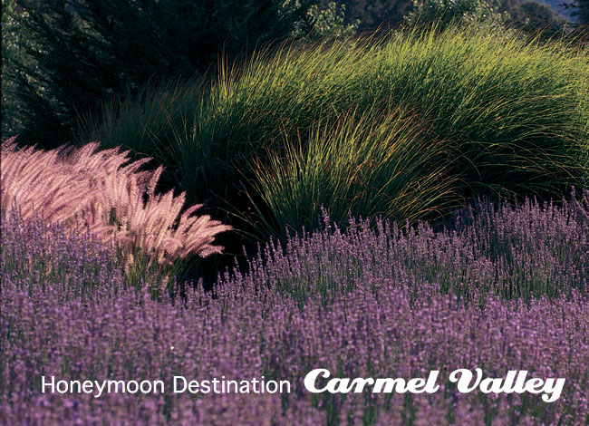 carmel valley honeymoon