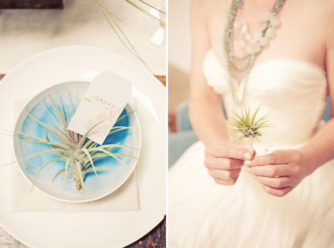 airplant wedding favor