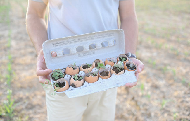 herb garden in egg shells