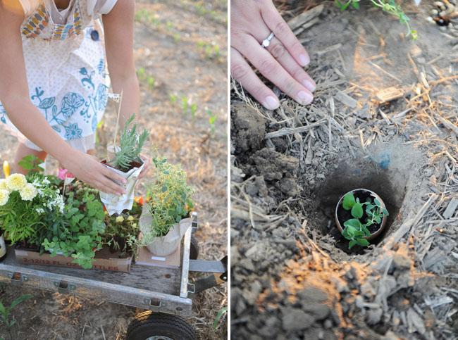 engagement photos planting vegetables