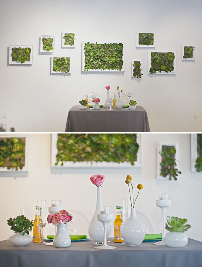 succulents in frames