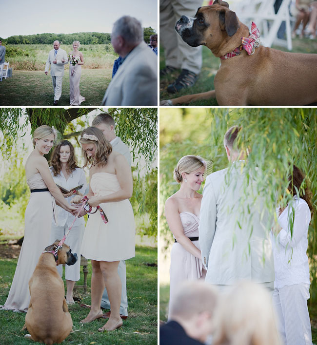 dog ring bearer wearing bowtie