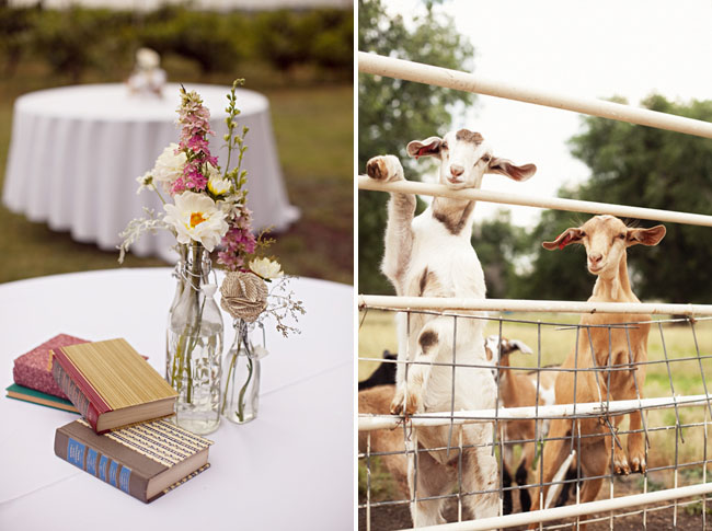 wedding with goats