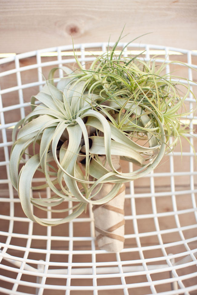 airplant-bouquet