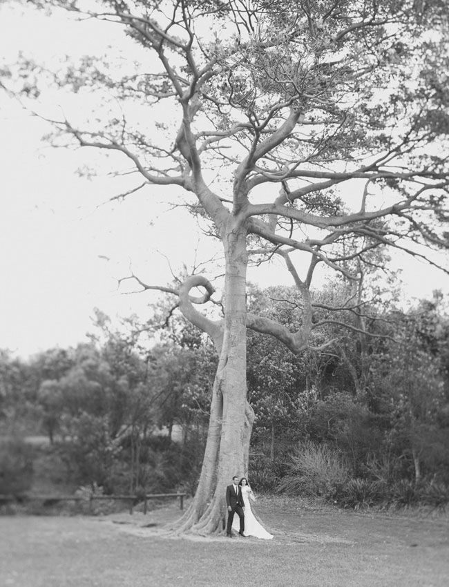 bride and groom, tall tree