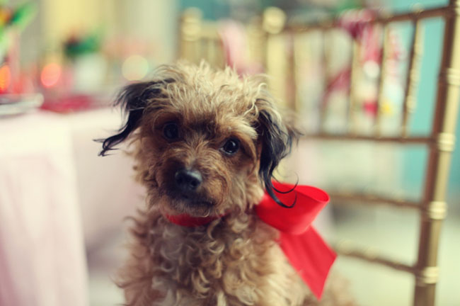 dog with red bow