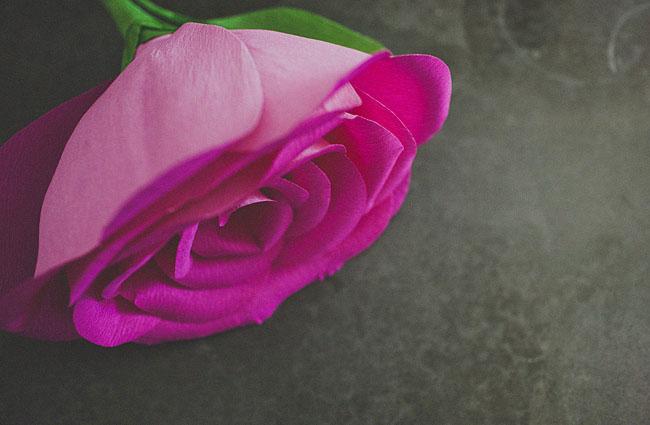 Diy giant paper rose flower diy giant paper rose 16 mightylinksfo