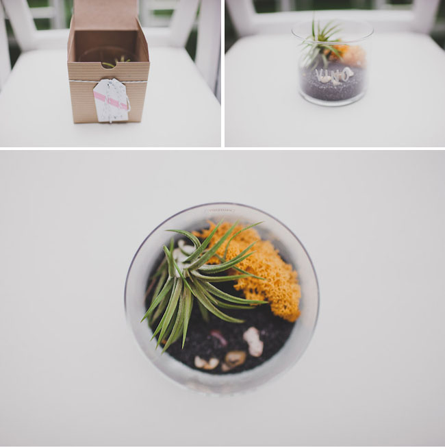 airplant favor