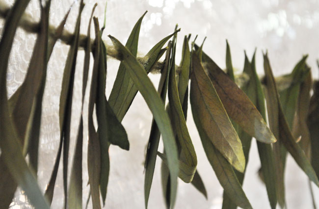 DIY-leaf-garland-03