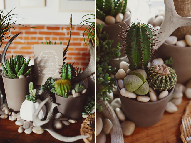 cactus and airplant tablescape