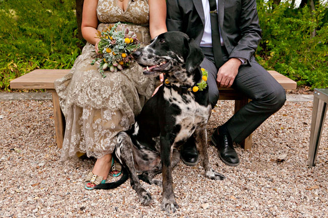 ring bearer dog with billy ball collar