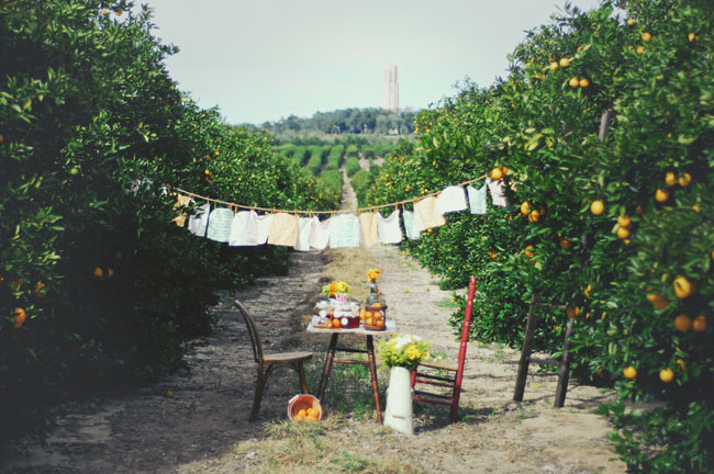 orange grove picnic