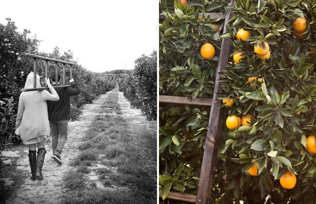 orange grove engagement