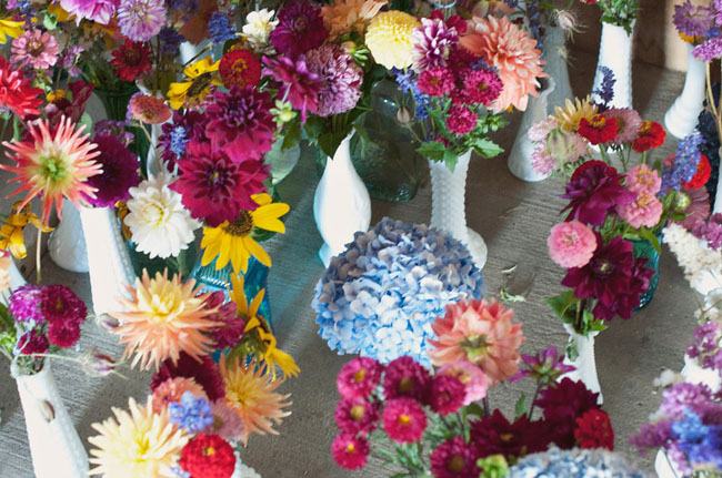 colorful flowers, hydrangeas