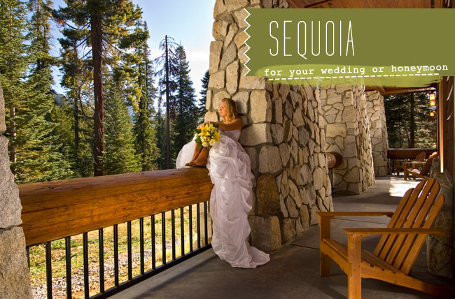 sequoia-wedding-01