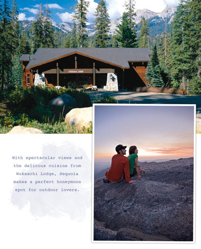 sequoia-honeymoon