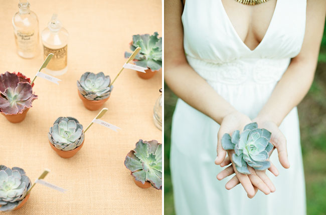 succulent escort card favors