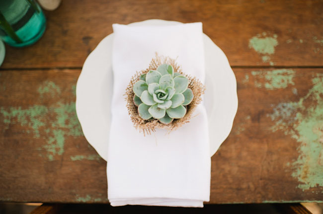 succulent table favor