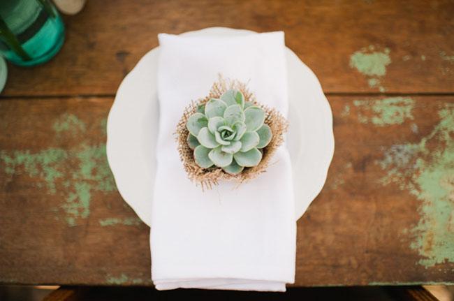 succulent table favor
