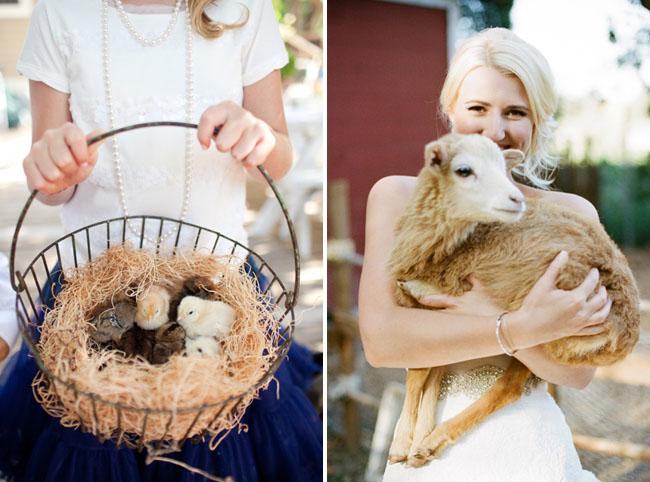 baby chicks wedding