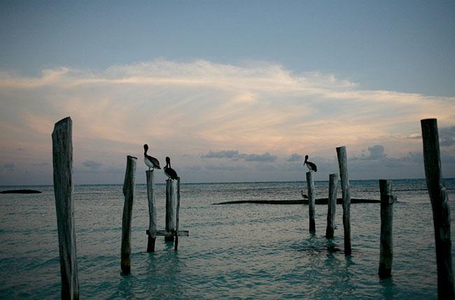 Birds on Poles