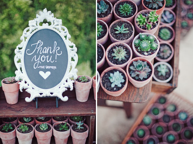 succulent planter favors