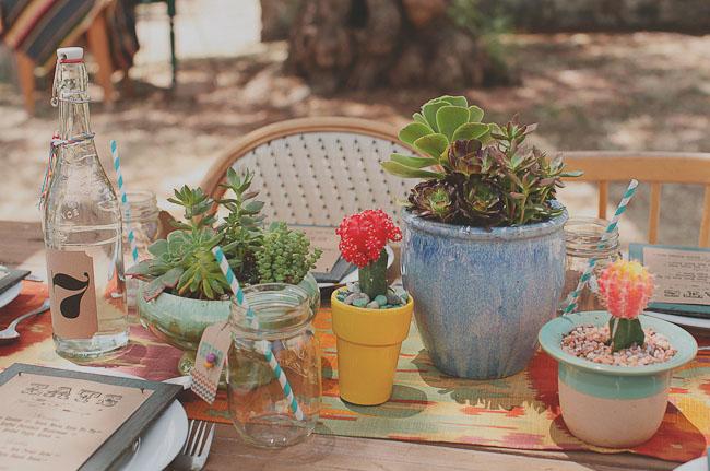 potted cactus plants