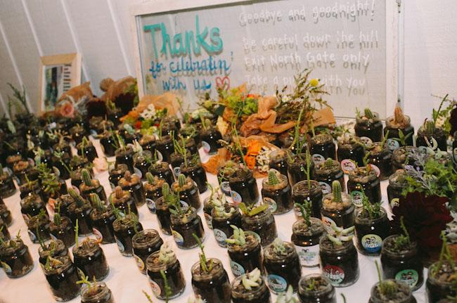 succulent plant favors