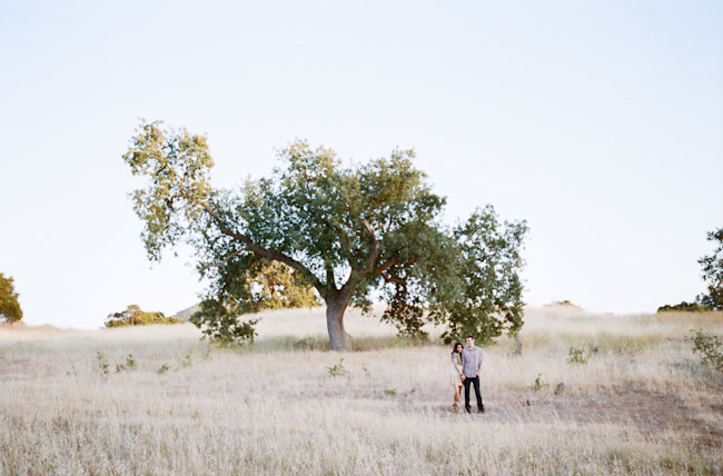 engagement by a tree