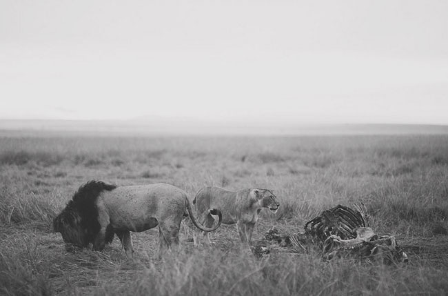 bride and groom safari