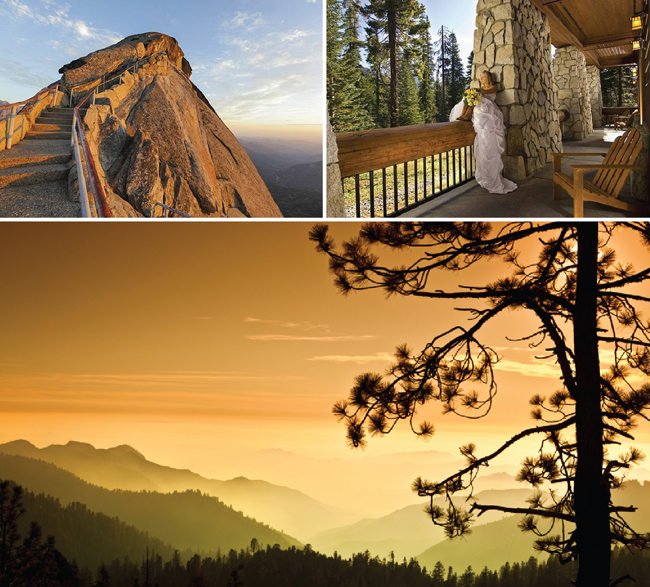 sequoia wedding