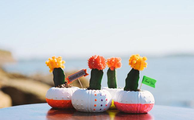 cactus in shells