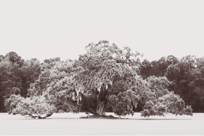 Mossy Oak Wedding Dresses 94 Marvelous tree