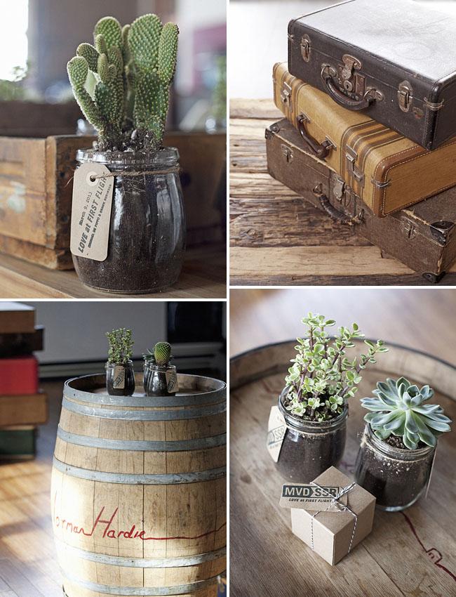 succulents in jars