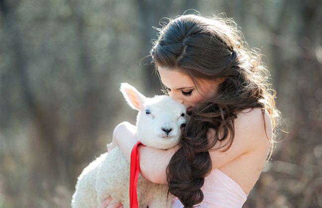 snow white and lamb