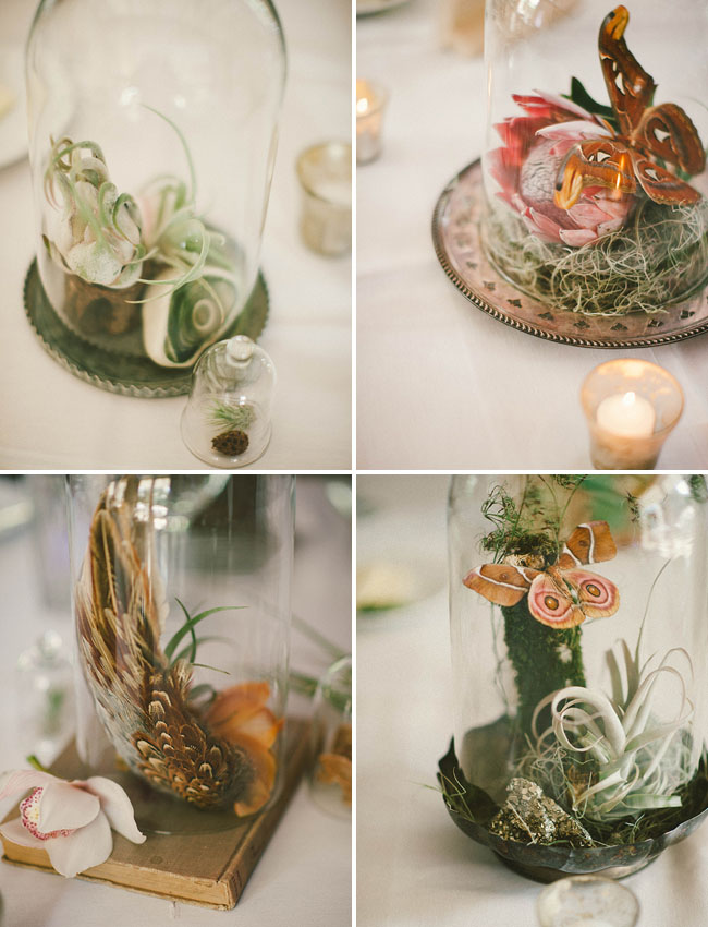 butterfly terrariums