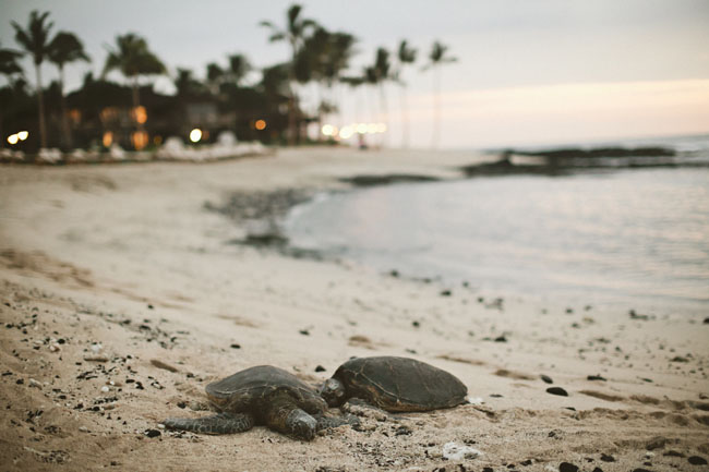 Hawaii_Wedding_BigIsland_05
