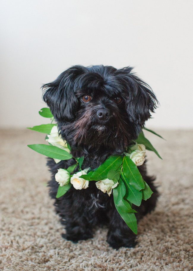 DIY Floral Wreath Pup