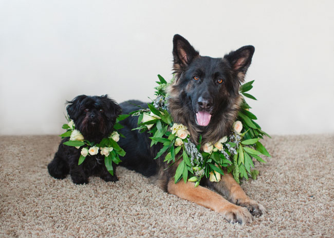 DIY Floral Wreath Dog