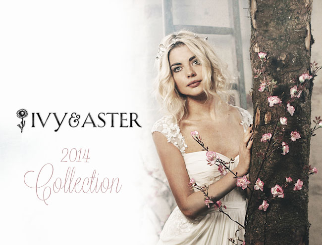 Ivy_Aster_Collection