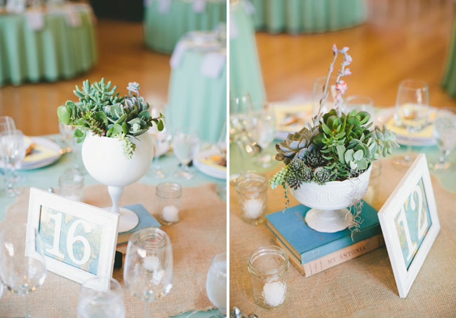 succulents in goblets