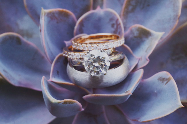 rings on succulent