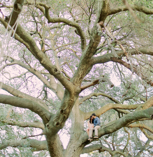 couple in tree